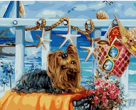 Картина за номерами Йоркширський тер'єр на пляжі   GX21473